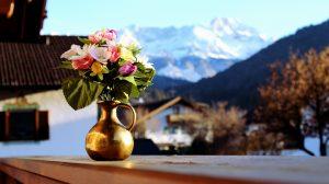 Kwiaty przez cały rok