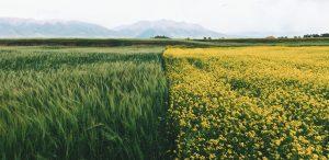 O czym musi pamiętać właściciel gospodarstwa rolnego?